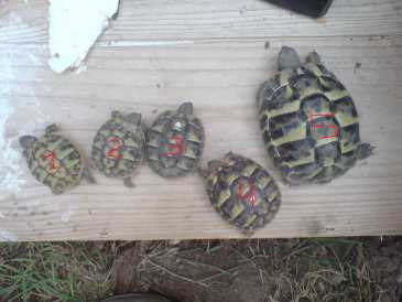 Photo : Propose à vendre Tortues