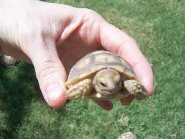 Photo : Propose gratuitement Tortues
