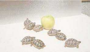 Photo : Propose gratuitement Tortue